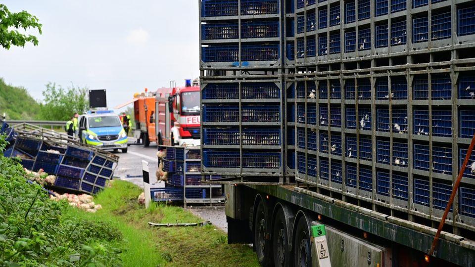 Ein mit Masthühnern beladener LKW hat auf der Autobahn einen Teil seiner Ladung verloren. Im Hintergrund Polizei und Feuerwehr.