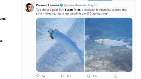 Auf einen Screenshot von Twitter sind zwei Fotos zu sehen: ein Fisch trägt einen Ring