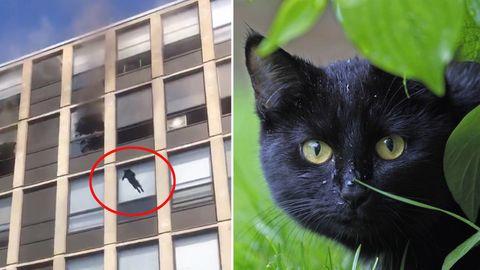 Eine Katze springt aus dem 5. Stock eines brennenden Gebäudes in Chicago.
