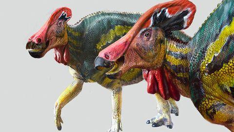 Die Illustration zeigt zwei Exemplare der Art Tlatolophus galorum. In Mexiko haben Forscher nach eigenen Angaben eine bisher unbekannte Dinosauriergattung und -art entdeckt.