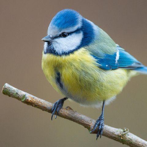 Mitmachaktion: Nabu ruft zur Vogelzählung auf