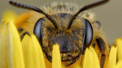 Welt-Bienentag: Acht Hörbücher für mehr Liebe zu Insekten
