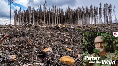In der aktuellen Folge Peter und der Wald sprechen wir mit Bestsellerautor Frank Schätzing über Möglichkeiten, die Welt noch retten zu können.