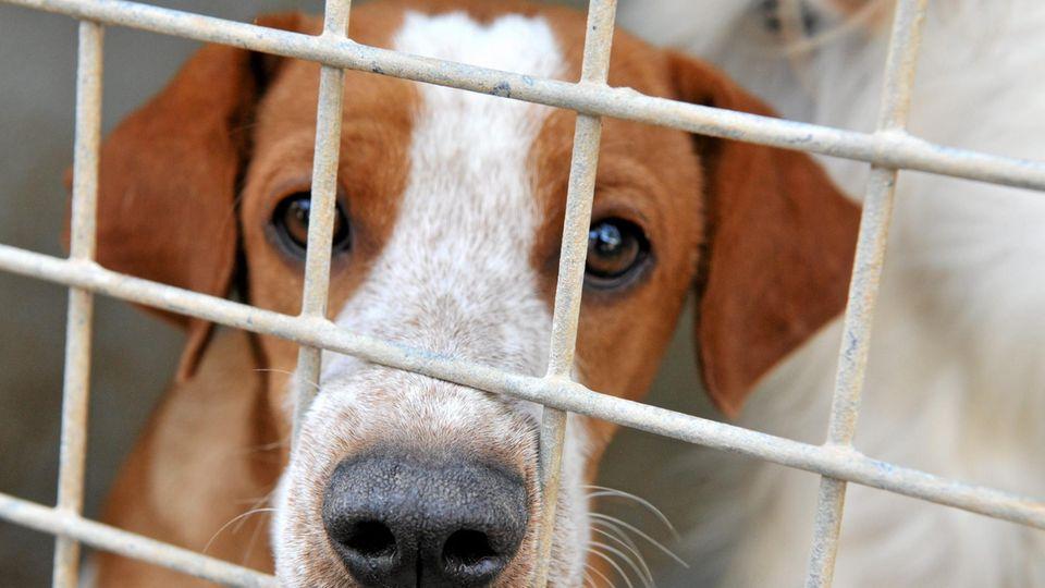 Hündin Bella lebt seit über 450 Tagen im Tierheim und konnte bislang kein Zuhause finden.