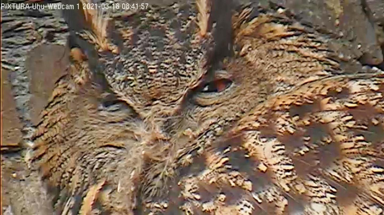 Der Kopf eines Uhus, von einer Webcam aufgenommen