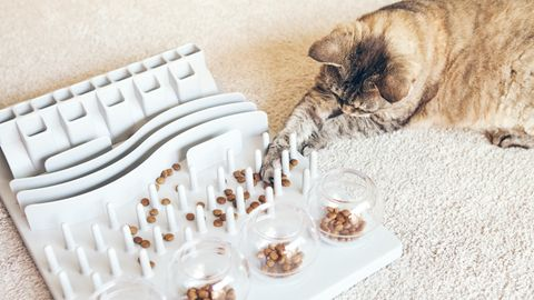 Intelligenzspielzeug für Katzen sorgt für Beschäftigung