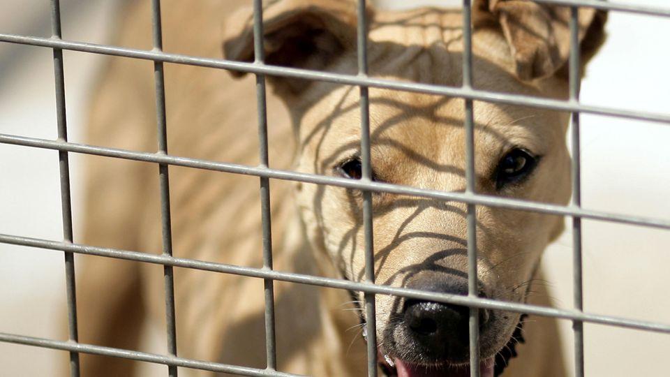 Ein Hund im Zwinger eines Tierheims