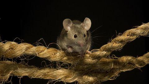 Eine Maus sitzt auf einem Seit