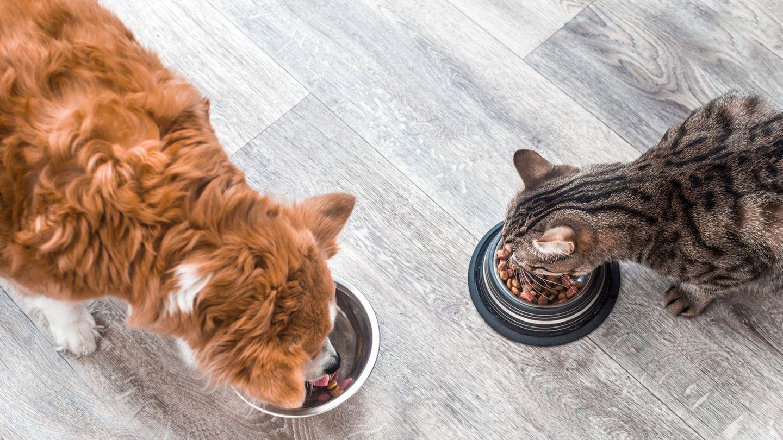 Hund und Katze fressen aus Näpfen