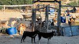 Gaza-Stadt, Gaza. Der militärische Konflikt zwischen Israel und der palästinensischen Terrororganisation Hamas hat viele Opfer gefordert. 248 Menschen, darunter 66 Kinder, starben nach offiziellen Angaben unter Bombentrümmern im Gazastreifen. In Israel kamen elf Erwachsene und zwei Kinder durch den Beschuss mit Raketen ums Leben. AuchTiere hatten zu leiden und wurden verletzt. Schutz und medizinische Hilfe fanden sie unter anderem in so einem Tierheim.
