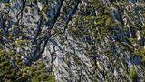 Nicht nur Pflanzen müssen rund um den Watzmann wahre Hochgebirgsspezialisten sein, auch Bergsteigern wird in dem felsigen Gelände viel abverlangt.