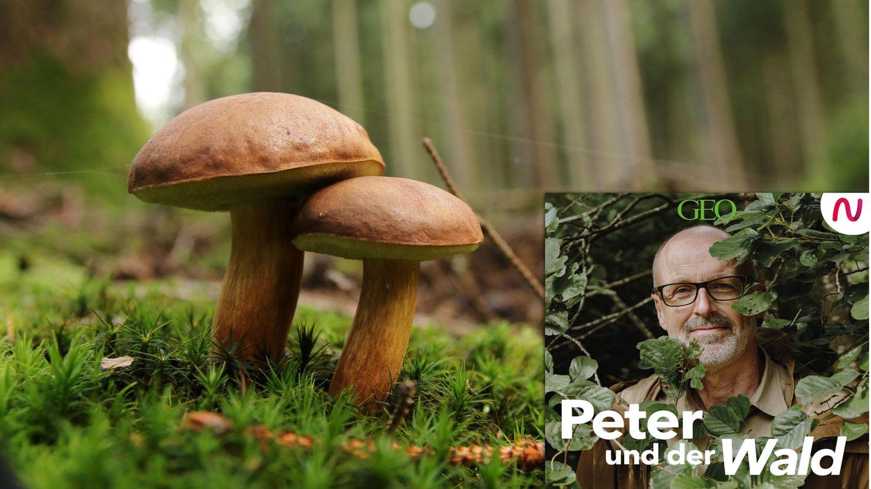 Otmar Diez beantwortet Peter Wohlleben Fragen zu der wunderbaren Welt der Pilze.