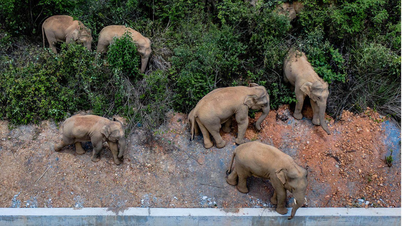 Elefanten, aus der Luft fotografiert, stehen an einer Straße