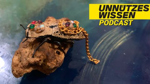 Der Makech-Käfer wird in Yucatán als Schmuck getragen
