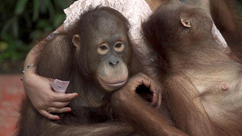 """""""Planet ohne Affen"""""""