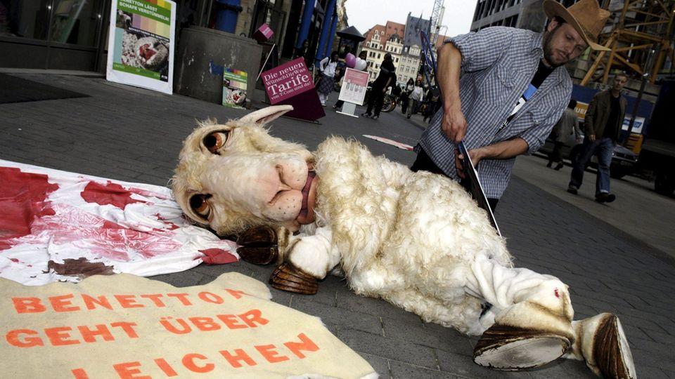 Mulesing: Das Leid der Schafe in Australien