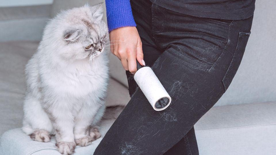 Katzen hinterlassen oft Haare auf dem Sofa