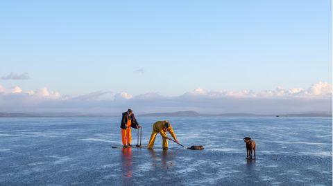 John Wilson (l.) und sein Sohn Michael auf Muschelsuche im Watt von Morecambe Bay