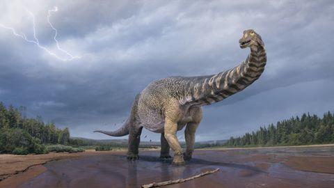 In Australien wurde eine neue Dinosaurierart bestimmt.