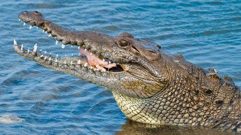 Eine junge Frau wurde in einer Lagune von einem Krokodil angegriffen. Ihre Zwillingsschwester konnte sie noch retten