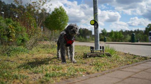 Ein ausgesetzter Hund ist an einen Parkschildmast angebunden