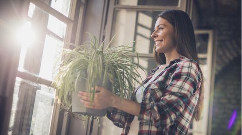 Pflanzen können das Raumklima verbessern