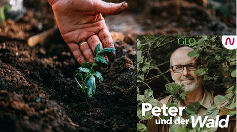 """In dieser Folge von """"Peter und der Wald"""" spricht Peter Wohlleben mit Hobbygärtnerin Meike Winnemuth"""