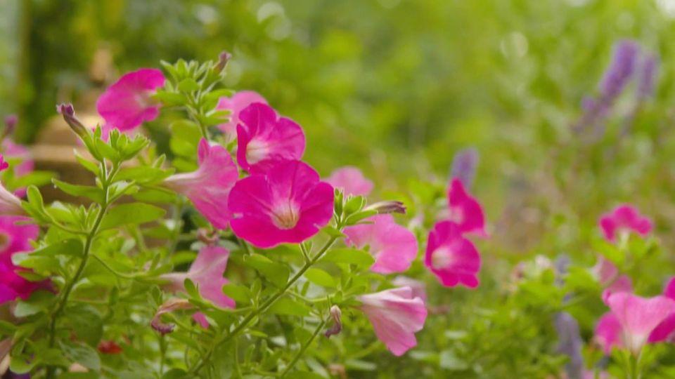 Hohe Temperaturen: So schützen Sie Ihre Gartenpflanzen vor der Hitze