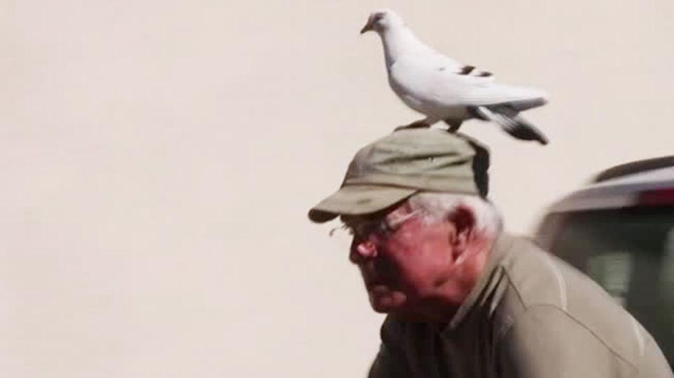 Ein älterer Mann mit olivgrüner Schirmmütze hat eine weiße Taube auf dem Kopf sitzen