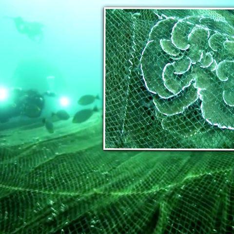 Video: 40 Taucher retten Korallenriff