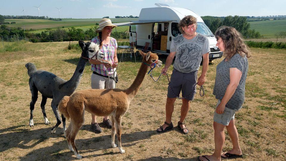 Hier istorganisiertes Wildcamping erlaubt:auf einer Wiese vom Reiterhof Gut Bösenburg, wo es auch Alpakas gibt.
