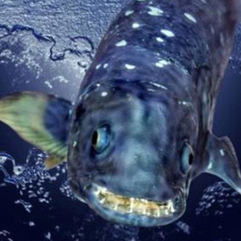 Kopf am mit fisch beule Harte Beule