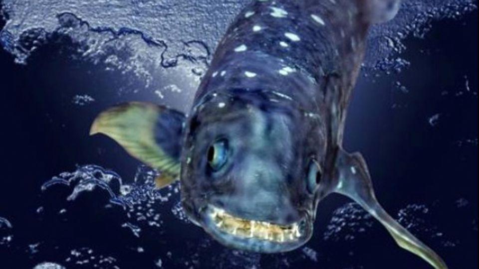 Dieser urzeitliche Monster-Fisch kann mehr als 100 Jahre alt werden