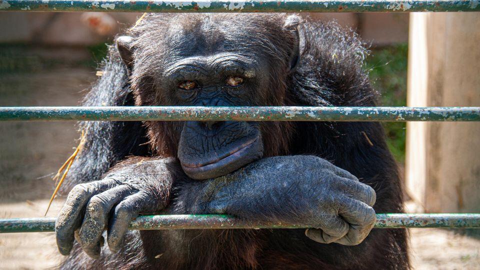 Julia Klöckners geplantes Verbot von Wildtieren in Zirkussen geht mehreren Länder-Ressortchefs nicht weit genug (Symbolfoto)