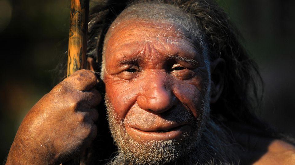 : Die Nachbildung eines älteren Neandertalers