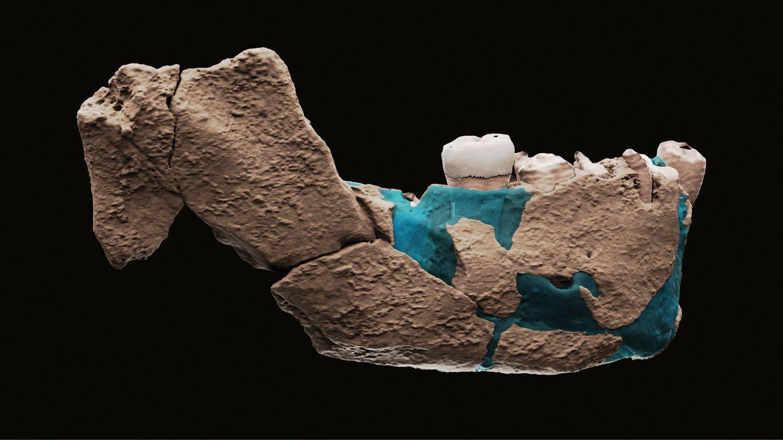 Eine virtuelle Rekonstruktion des Unterkiefers eines menschlichen Vorfahren