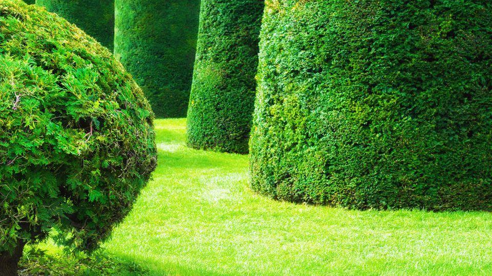 In Form getrimmte Bäume in einem Park