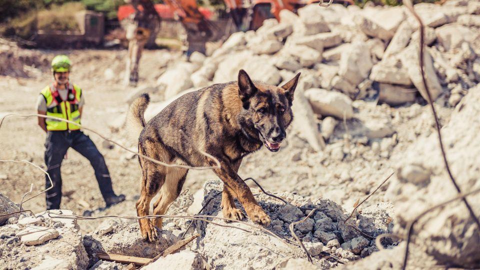 Schäferhund läuft über Trümmer eines Hauses, ein Hundeführer beobachtet ihn aus der Ferne.