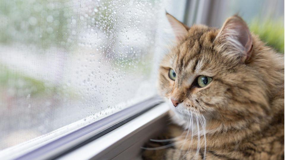 Eine Katze schaut aus einem regennnassen Fenster