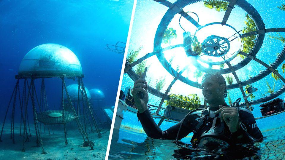 Erst belächelt, dann bestaunt: Unternehmer baut Basilikum unter Wasser an