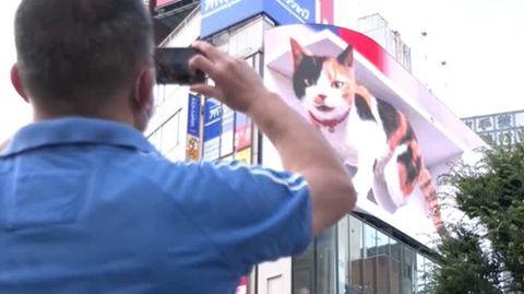 Ein Mann und eine Frau sind von hinten zu sehen, wie sie mit ihren Smartphones eine Katze als 3-D-Animation fotografieren