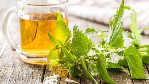 Brenessel im Tee: Diese Kräuter sind wahre Alleskönner – als Tee und Gewürz