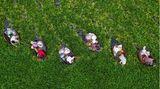 Taizhou, China. Auf Booten bahnen sich Erntehelfer in der Jiangtsu-Provinz ihren Weg, um Wasserkastanien aufzulesen.
