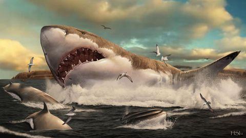 Wissen: 5-Jähriger findet Zahn von Millionen Jahre altem Ur-Hai am Strand