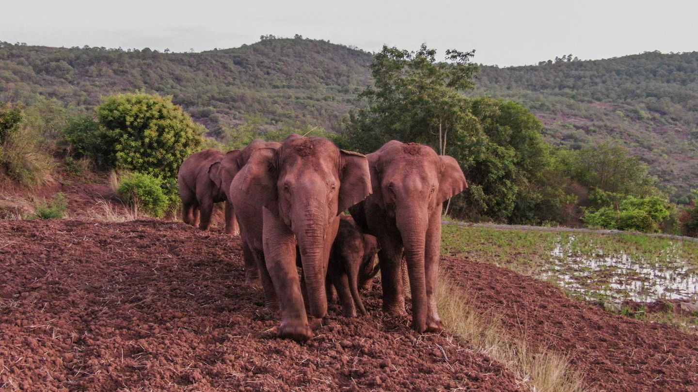 Elefanten laufen über ein Feld