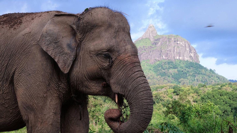 Seltener Sumatra-Elefant in Indonesien enthauptet.