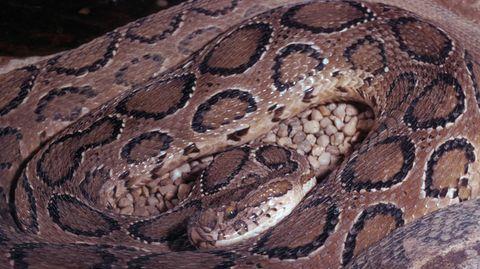 14 gefährliche Giftschlangen in Potsdamer Wohnung gefunden