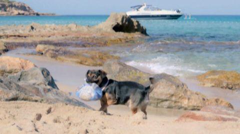 Hund Arnold befreit Strand auf Ibiza von Plastik