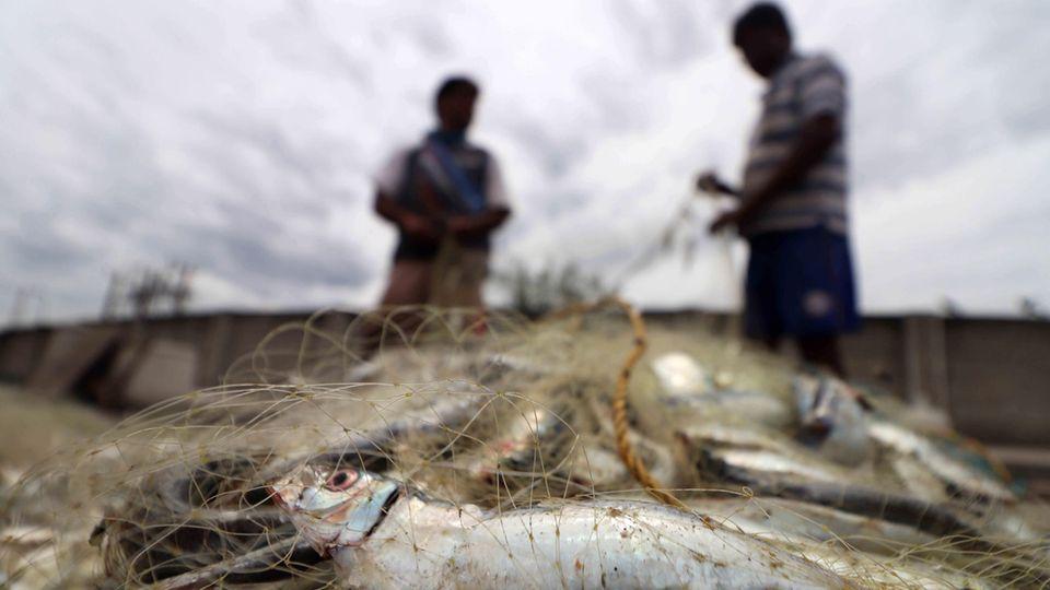 Fischerei in Indien