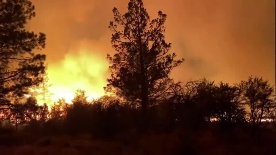 Brandstiftung?: Zehn Meter hohe Flammen: 20 Tonnen Bücher an Frankfurter Universität verbrannt